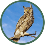 owlcolor